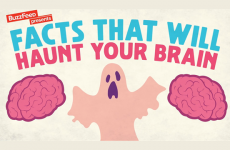 Facts That Will Haunt Your Brain